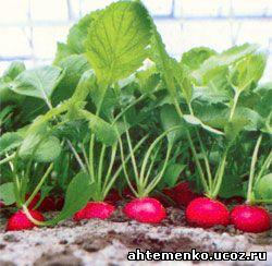 выборе термобелья можно посадить редиску и землянику вместе свойство влаговыводящего
